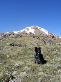 Lady Dog below Fossil Mountain