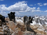 Lady Dog and Sheba atop Mount Belford