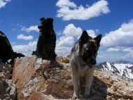 Lady Dog is perched on the summit of Mount Belford; Sheba looks down below