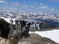 Sheba poses on top of Mount Belford