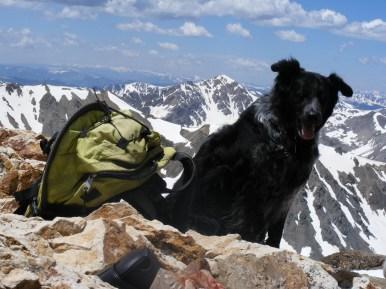 Lady Dog atop Mount Belford