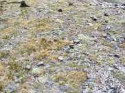 Organic sapphires at 14,000 feet