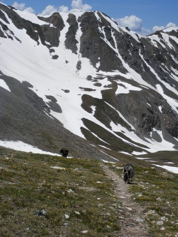 Dogs on the trail near Elkhead Pass