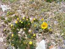 Avens on the left, an Old-Man-of-the-Mountain to the right