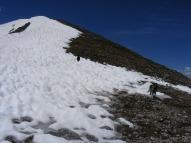 Dogs on alpine snow
