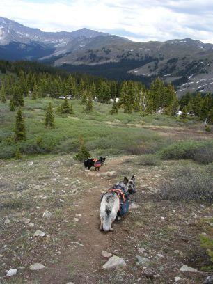 Sheba and Lady Dog on the South Texas Creek Trail