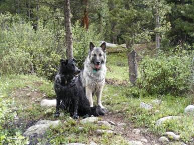 Lady Dog and Sheba posing on the trail