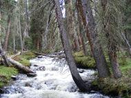 South Texas Creek cascades through the forest