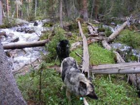 Sheba and Lady Dog explore near South Texas Creek