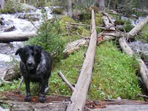 Lady Dog adjacent to South Texas Creek