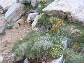 Garden of diversity in the alpine near Mount Shavano
