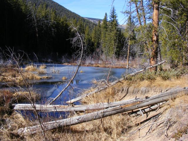 Beaver pond with skim of ice on Summerville Trail