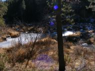 Frozen water on beaver pond, autumn sun light pouring through the forest