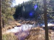 Lodgepole pine stand vigil over Summerville Creek's beaver ponds