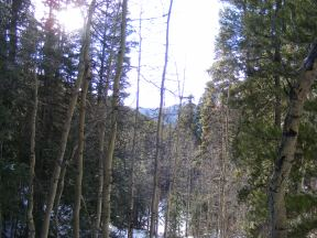 The aspen commingle with lodgepole pine in the minor creek