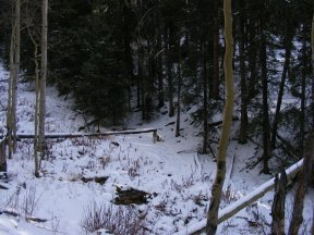 Sheba sitting in the snow along the Summerville Creek