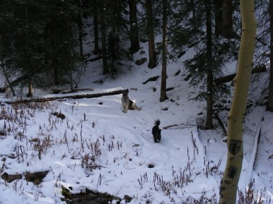 Sheba and Lady Dog exploring a tributary of Crystal Creek