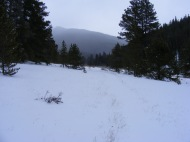 It's late autumn and the snow has already covered the ground