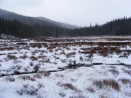 Wet meadow along the mystery trail