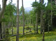 I'm on the Colorado Trail, somewhere in Weldon Gulch and it is so green that I was laughing when I took this photo