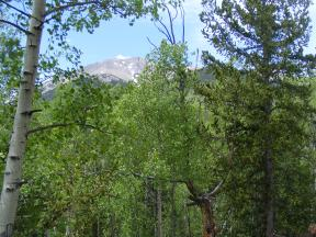 Appealing view of spring's greenery and mountain scenery found on the Colorado Trail south of Shavano Trail