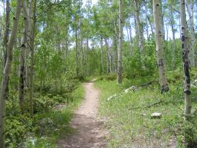 The Colorado Trail passing through an aspen forest south of the Shavano Trail