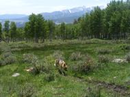 Draco cruising on the Colorado Trail on a fine spring day, south of Shavano Trail