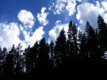 The forest in the shadow of passing clouds