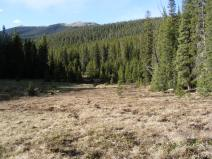 The meadow is still brown as the final snows melt off from Agate Creek