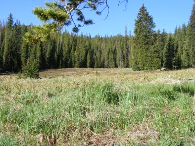 Camp was located in this meadow on a small tributary near the headwaters of Agate Creek