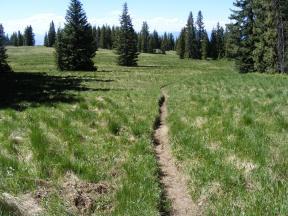 Trail 451 between Rock Springs and Bonfisk Peak