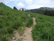 West Maroon Trail in early July