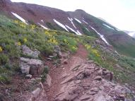 """Alpine Sunflower, also known as Old-Man-of-the-Mountain"""" on the trail between West Maroon and Frigid Air Passes in the Elk Mountains"""