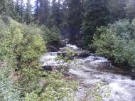 Cement Creek flowing through the forest