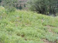 Lush vegetation along Cement Creek