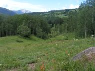A fine July day along Cement Creek in the Elk Mountains