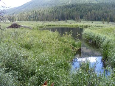 Beaver lodge in Texas Creek