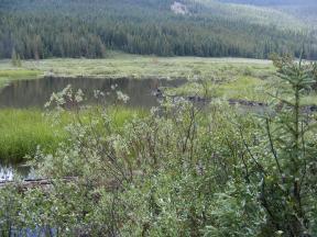 Beaver ponds on Texas Creek