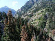 The dead conifers are recent victims of one of the periodic beetle infestations that occur in the forests