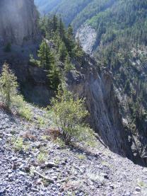 On the Bear Creek Trail - Don't trip!