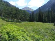 Vibrant vegetation in a Bear Creek meadow