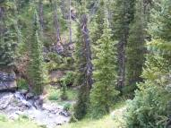 Sub-alpine forest about Bear Creek