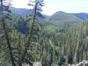 Summer in the Rocky Mountains near Gunnison, Colorado