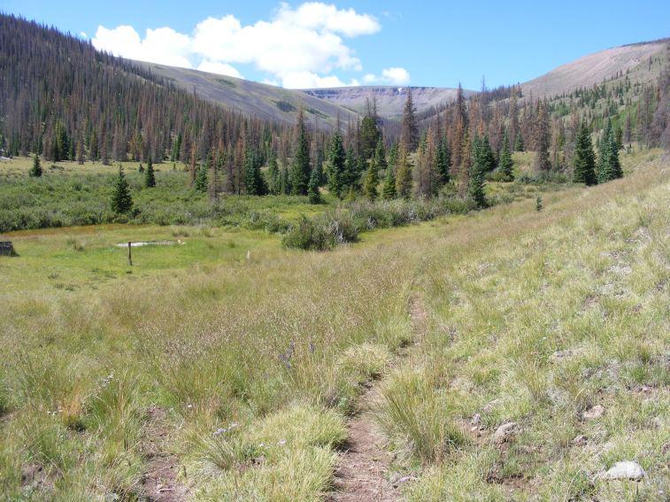 Machin Basin Trail in the Lake Fork Cochetopa Creek