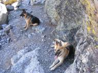 Leah and Draco rest below Gunsight Pass