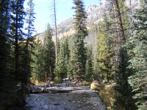 Roaring Fork flows through the forest