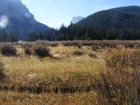 In the meadow just south of Lower Green River Lake