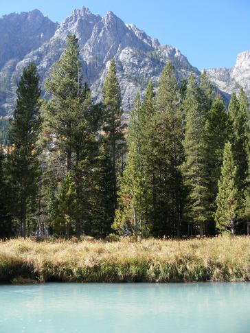 Sub-alpine conifers growing near the upper Green River