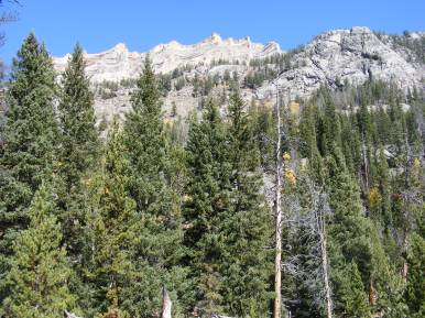 Sub-alpine forest in the Wind River Range