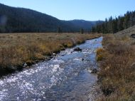 Bacon Rind Creek in Yellowstone National Park